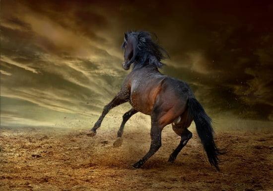 アメリカ大陸を走り抜ける馬